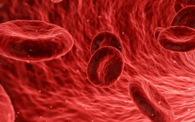 The Sickle Cell Anemia (SCA) Patient