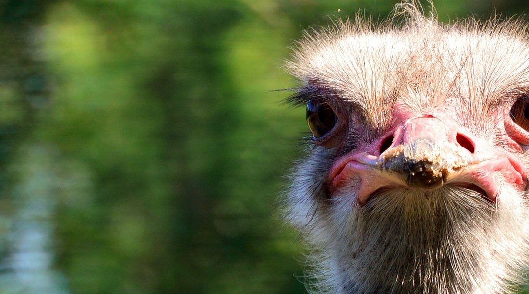 Are You an Ostrich Regarding Your Health